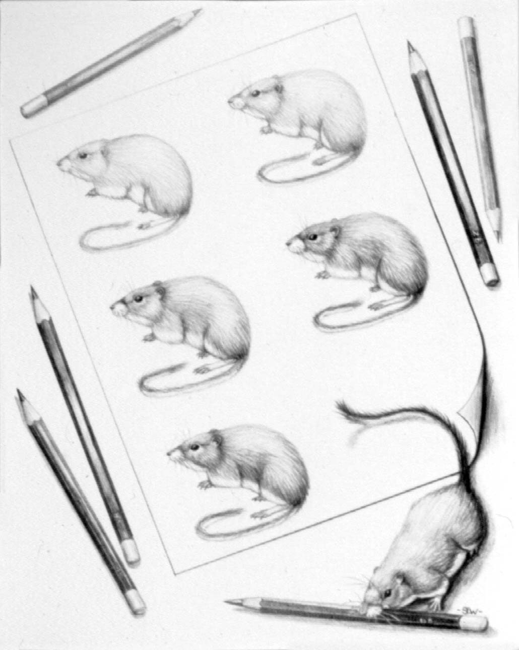 Field Guide Mice